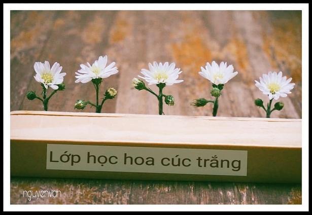 bo anh lop hoc hoa cuc trang gay sot cong dong mang
