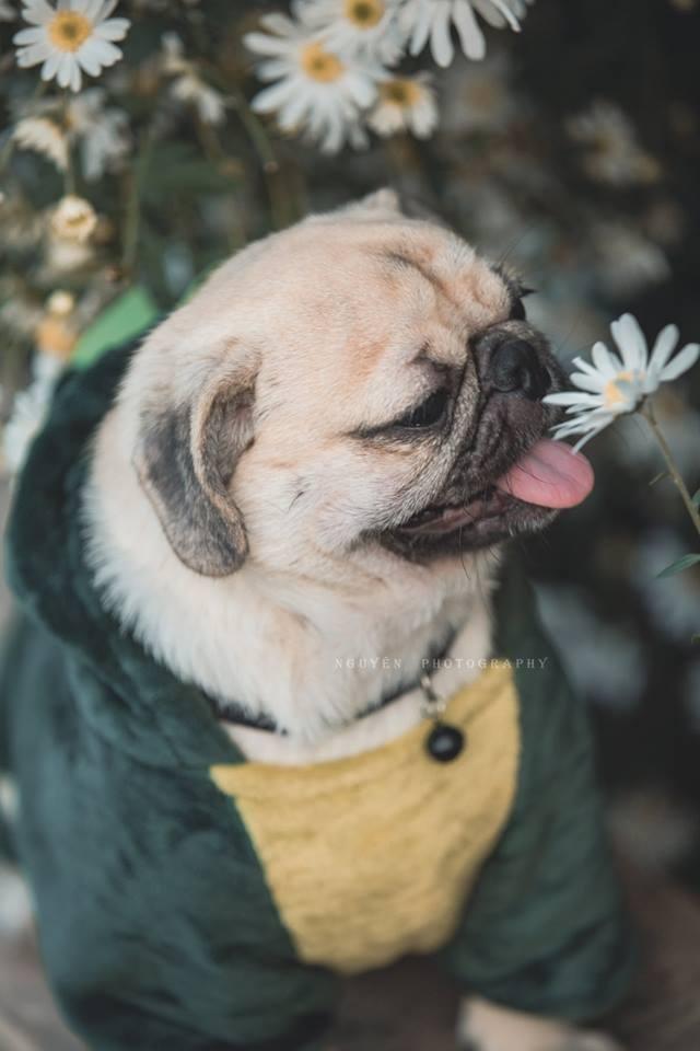 bo anh thu cung va cuc hoa mi gay xon xao cong dong mang